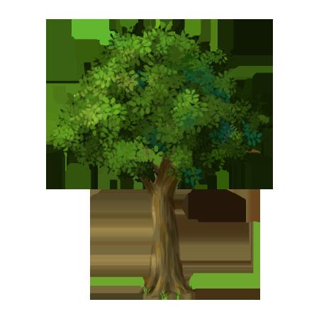나무근경1.png